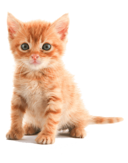 http://www.mypetcare.co.za/wp-content/uploads/2017/04/pricing-263x334.png