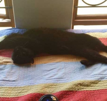 Pet Sitting in Irene | House Sitting in Irene - Cat stretching in the sun