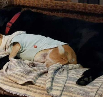 Pet Sitting in Irene | House Sitting in Irene - Dogs sleeping