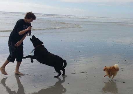 Pet Sitting in Irene | House Sitting in Irene - Playing on beach with 2 dogs
